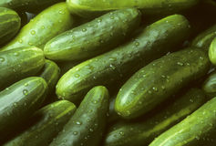 Pile of fresh cucumbers lying diagonally Royalty Free Stock Images