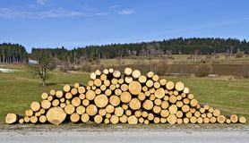 Pile of fresh cut logs Royalty Free Stock Image