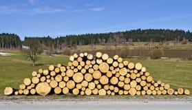 Pile of fresh cut logs Royalty Free Stock Image