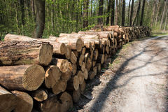 Pile of fresh cut wood. In forest Royalty Free Stock Photography