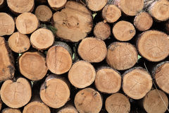 Pile of fresh cut wood. In forest Stock Photography