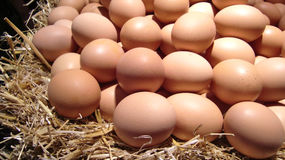 Pile of fresh eggs. On straw Royalty Free Stock Image