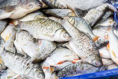 Pile of fresh fish in a cart stock photo
