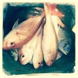 Pile of fresh fish Royalty Free Stock Photos