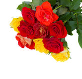 Pile of fresh   garden roses Stock Image