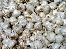 Pile of fresh of Garlic bulbs Royalty Free Stock Photos