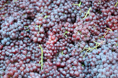 Pile fresh grapes. Royalty Free Stock Photos