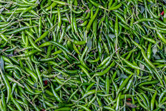 Pile of fresh green chilli peppers texture. Raw food background. Close up. Traditional vegetable market in Bangkok. Thailand. Selective focus Royalty Free Stock Images