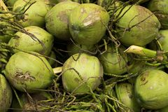 Pile of fresh and green coconut for background. stock photos