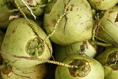 Pile of fresh green coconuts for sale at a market in Thailand. Southeast Asia Stock Images