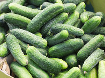 Pile of fresh green cucumbers. Fresh green cucumber collection outdoor on market macro Royalty Free Stock Photos