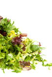 Pile of fresh lettuce in closeup Stock Images