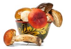 Pile of fresh mushrooms. Isolated on white Stock Photos
