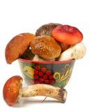 Pile of fresh mushrooms. Isolated on white Stock Images
