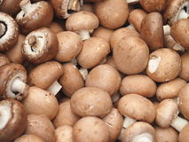 Pile of fresh mushrooms (champignon portobello) Royalty Free Stock Images