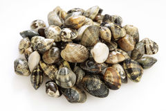Pile of fresh mussels Stock Images