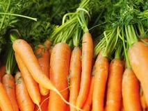 Pile of fresh orange carrots. Pile of fresh orange carrots at farmers market royalty free stock photography