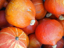 Pile of fresh orange pumpkins. Royalty Free Stock Images