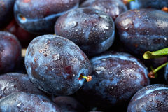 Pile of fresh plums Royalty Free Stock Photo