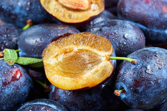 Pile of fresh plums Royalty Free Stock Photos