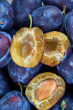 Pile of fresh plums Stock Photography