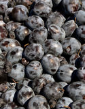 Pile of fresh plums and grapes. Royalty Free Stock Photography