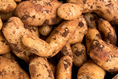 Pile of fresh potatos Royalty Free Stock Photo