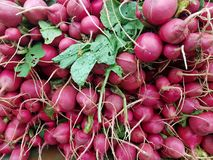 A pile of fresh radishes on the market Stock Image