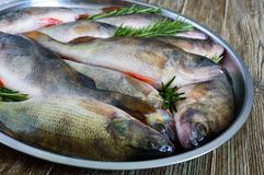 A pile of fresh raw fish on a tray. Close-up. Carp. Fresh catch Stock Photo