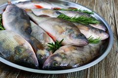 A pile of fresh raw fish on a tray. Close-up. Carp. Fresh catch Royalty Free Stock Photo