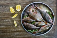 A pile of fresh raw fish on a tray on a wooden background. Top view. Carp. Fresh catch Royalty Free Stock Photo