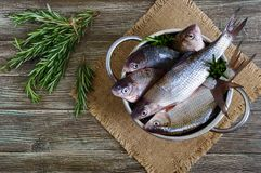 A pile of fresh raw fish on a wooden background. Top view. Carp. Fresh catch Royalty Free Stock Image