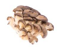 Pile of fresh raw oyster mushrooms isolated on white background. Studio Photo Royalty Free Stock Photography
