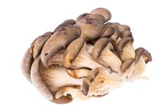 Pile of fresh raw oyster mushrooms isolated on white background. Studio Photo Royalty Free Stock Images