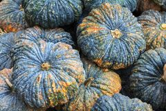 Pile of fresh raw thai pumpkin at local vegetable market for health, food and agriculture concept design.  Stock Image