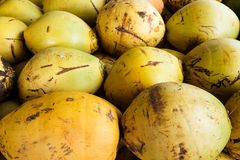 Fresh ripe coconuts. Pile of fresh ripe coconuts Royalty Free Stock Images