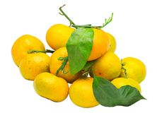 Pile of fresh ripe mandarin with small twigs and leaves. Isolated on white background stock image