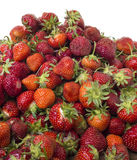 Pile of fresh ripe strawberries Royalty Free Stock Image