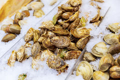 Pile of Fresh Seafood Clams on Ice Close Up Healthy Eating. Pile of Fresh Seafood Clams on Ice Close Up Background. Healthy Eating Stock Images