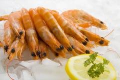 Pile of fresh shrimp. Fresh shrimp on ice with lemon and parsley Stock Images