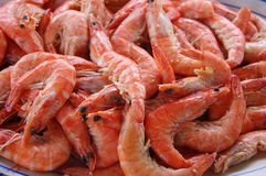 Pile of Fresh Shrimp Stock Photo