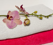 A pile of fresh towels with orchid flowers on them Royalty Free Stock Images