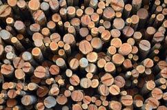 Pile of freshly cut logs Royalty Free Stock Image