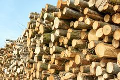 A pile of freshly cut tree logs. A pile of freshly cut or sawn tree logs against a blue sky Stock Photography