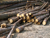 Pile of freshly cut wood Royalty Free Stock Images