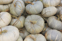A Pile of Freshly Harvested White Pumpkins Stock Images