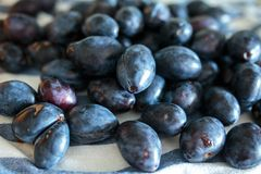 Blue plums fresh from the orchard Royalty Free Stock Photos