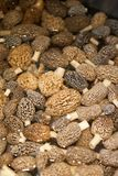 Pile of picked edible mushrooms in close up Stock Image