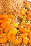 Pile of of freshly picked, local pumpkins and gourds on hay royalty free stock photography