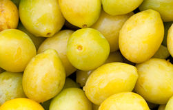 Pile of freshly picked yellow plums Stock Images